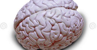 Човечји мозак