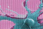 Усамљени неурон (Википедија)