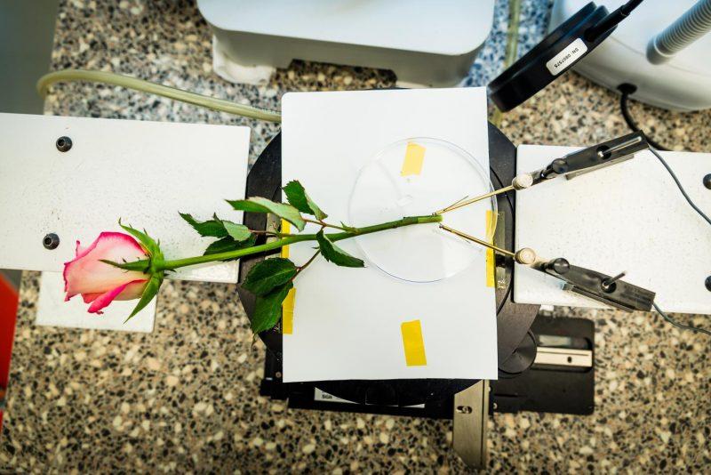 Цветни кондензатор (Универзитет Линчепинг)
