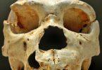 Лобања хајделбершког човека (Википедија)