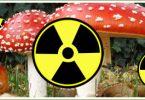 Černobiljske pečurke (Vikipedija, ilustracija)