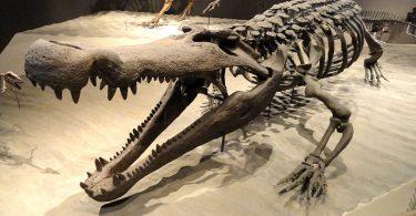 Крокодил деиносукус (Википедија)