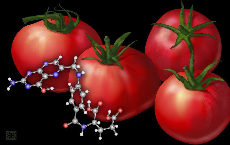 Лековито воће (Википедија)