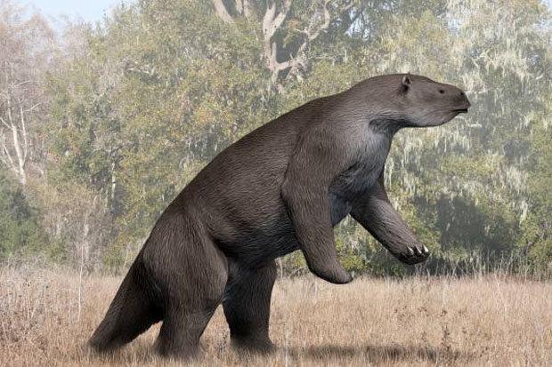 Блиски рођак (Megatherium americanum, Википедија)
