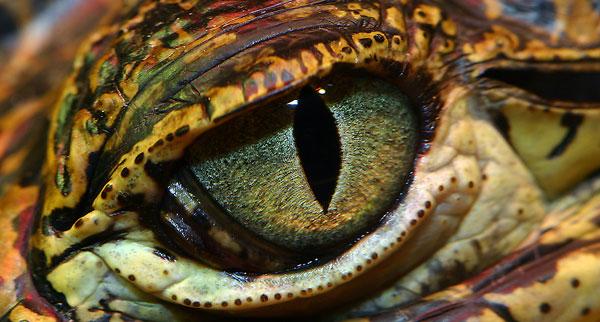 Смртоносно око (Википедија)