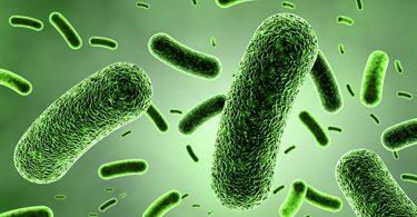 Умрежене бактерије (Википедија)