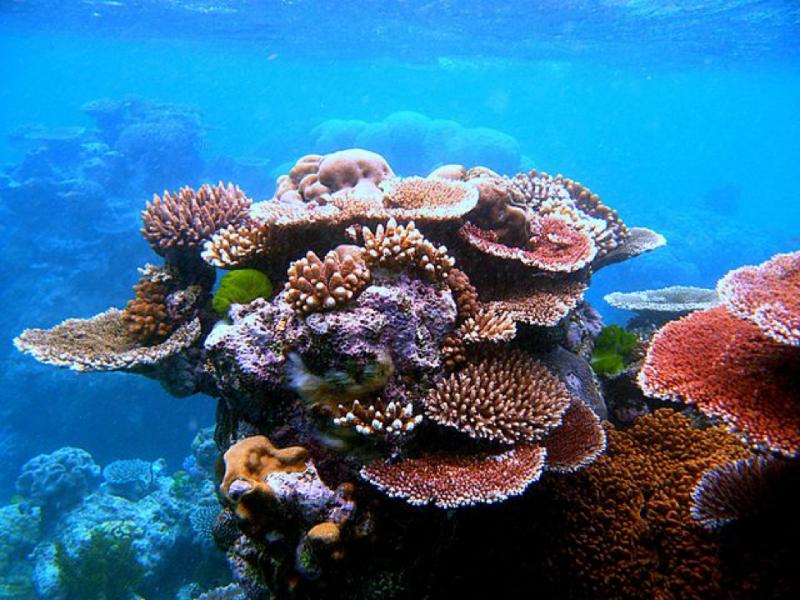 Размножавање у пролеће (Википедија)