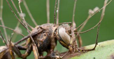 Заражени инсект (Википедија)