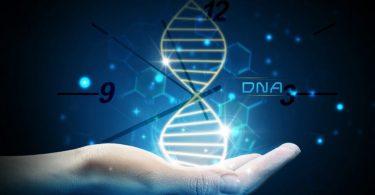 ДНК сат (Википедија)