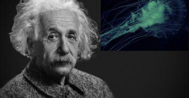 Albert Ajnštajn (Vikipedija).
