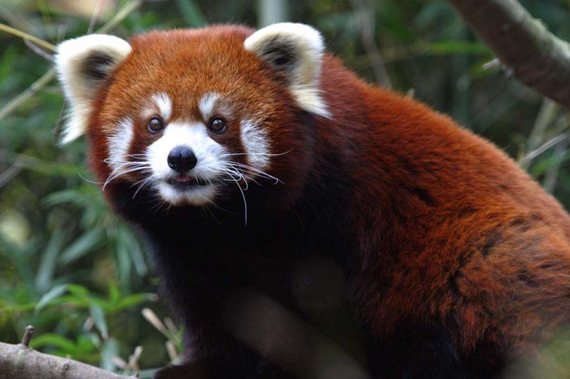 Угрожена врста (Википедија)