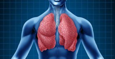 Ljudska pluća (Vikipedija)