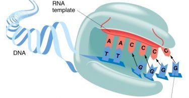 Учинак ензима (Википедија)