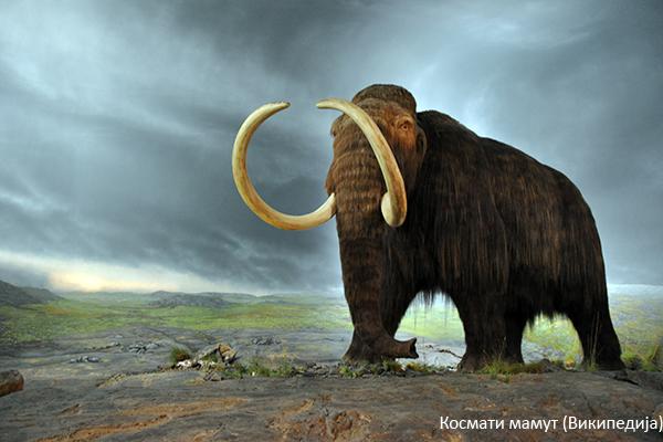Kosmati mamut (Vikipedija)