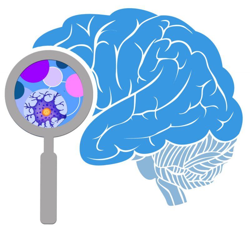 Pogled u mozak (NSF)
