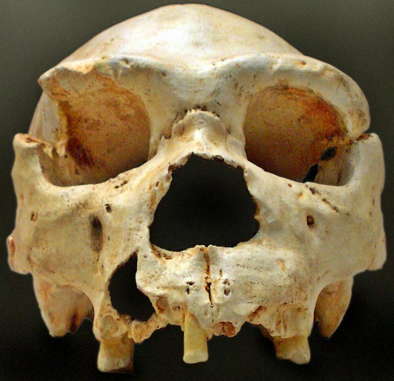 Lobanja hajdelberškog čoveka (Vikipedija)