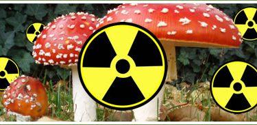 Чернобиљске печурке (Википедија, илустрација)