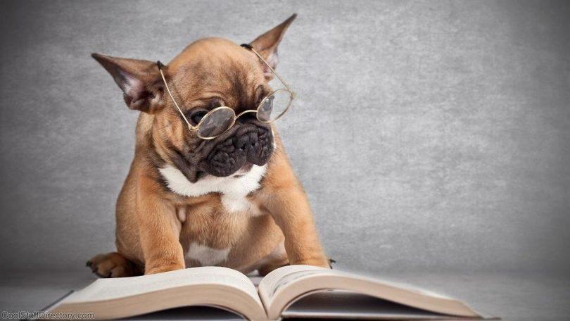 I ja volim da čitam (Vikipedija)