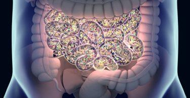 Стомачне бактерије (Кливленд клиника)