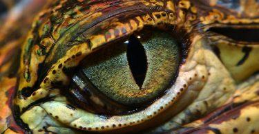 Smrtonosno oko (Vikipedija)