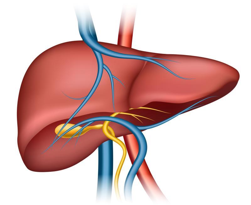 Prikaz jetre (Vikipedija)