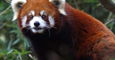 Ugrožena vrsta (Vikipedija)