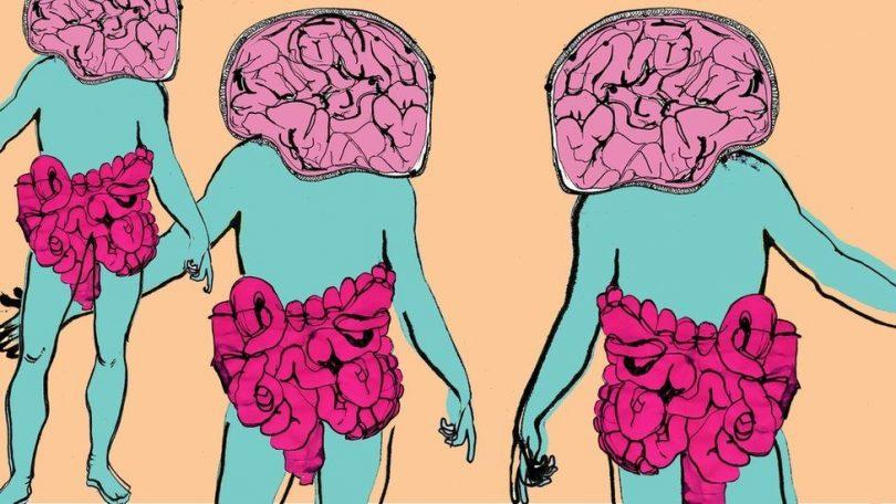 1. Веза црева-мозак.